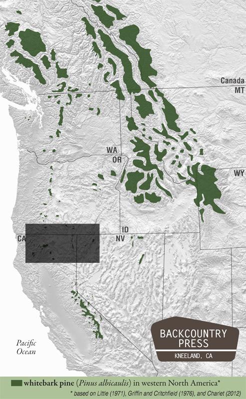 whitebark pine range m ap